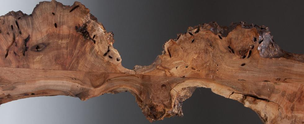 Burled Maple
