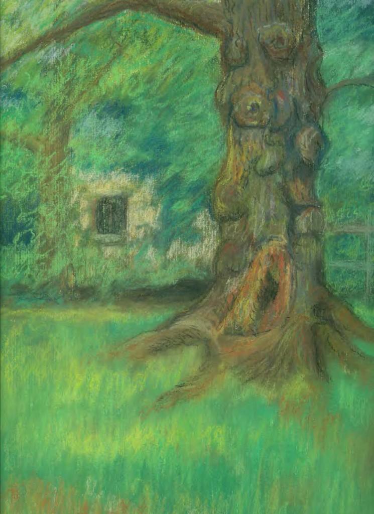 BIO drawing of burled maple tree