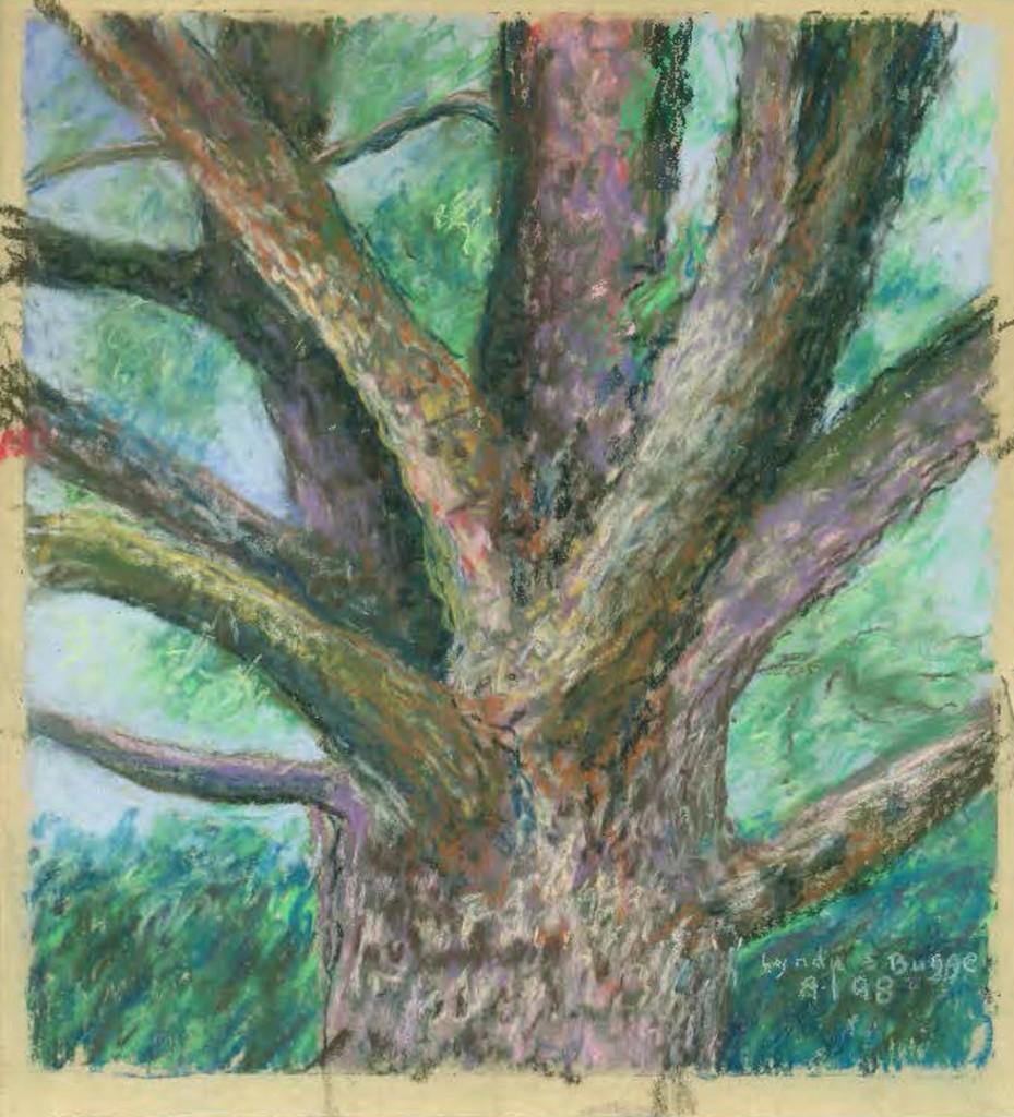 BIO drawing of walnut tree